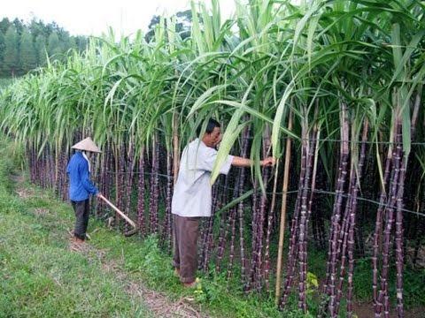Tây Ninh kêu gọi đầu tư dự án chế biến phụ phẩm từ chế biến đường