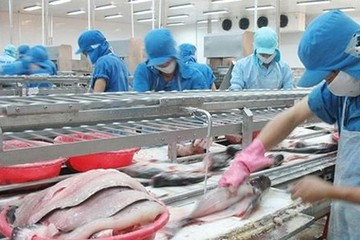Sau EU, cá tra Việt Nam lại bị bôi xấu tại Rumani