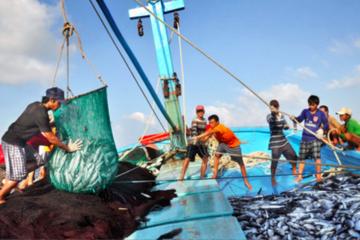 Phó Thủ tướng yêu cầu chấn chỉnh hoạt động khai thác hải sản