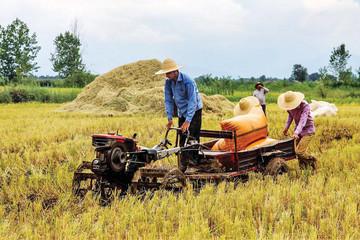 Giá gạo xuất khẩu của Việt Nam vẫn cao trước đồn đoán có đơn hàng mới