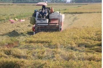 Các doanh nghiệp nông nghiệp vẫn gặp khó