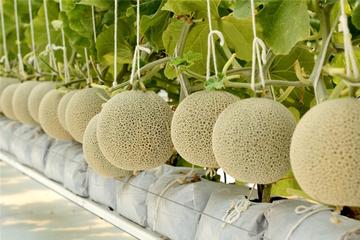 Nông nghiệp Việt vẫn hấp dẫn vốn ngoại