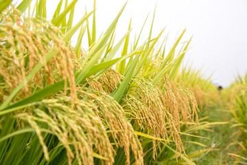 Vinaseed - Hướng đi mới của nông nghiệp Việt