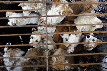 Hạ viện Mỹ thông qua dự luật cấm ăn thịt chó, mèo