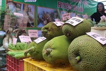 Bình Phước loay hoay tìm đầu ra cho trái cây
