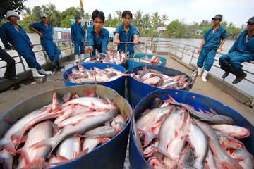 Triển vọng giá cá tra chưa rõ ràng trong cả ngắn và dài hạn