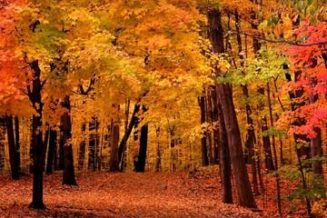 Ngắm cảnh mùa thu trên thế giới