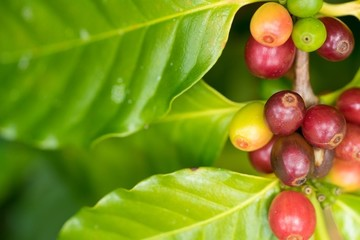 Khủng hoảng giá cà phê thế giới năm 2018