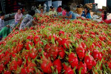 'Nông sản Việt xuất khẩu 3 đồng thì lại nhập về một đồng'