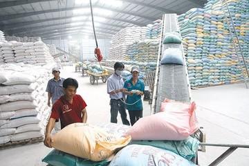 VDSC: Nới lỏng điều kiện xuất khẩu gạo vẫn còn vướng mắc