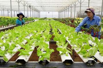 Triển khai loạt cơ chế khuyến khích doanh nghiệp đầu tư vào nông nghiệp