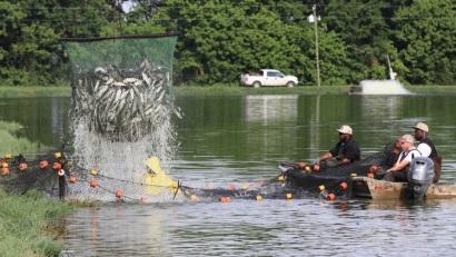 Mỹ đẩy mạnh tiêu thụ cá da trơn