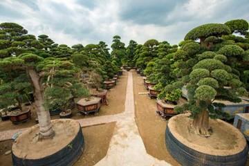 Điều cay đắng tại vườn cây 2.000 tỷ của Trầm Bê