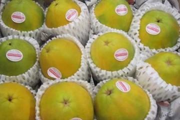 Xuất khẩu đu đủ chuyển gen sang Hàn Quốc, doanh nghiệp bị 'tuýt còi'