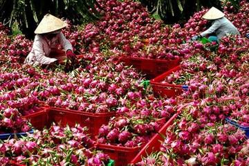 Tăng trưởng xuất khẩu rau quả năm nay chưa bằng 1/4 năm trước