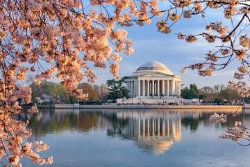 Địa điểm tốt nhất để ngắm hoa anh đào vào năm 2019