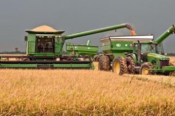 Trung Quốc cho phép nhập khẩu gạo từ Mỹ nhằm giảm căng thẳng