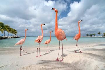 10 hòn đảo động vật độc đáo trên thế giới
