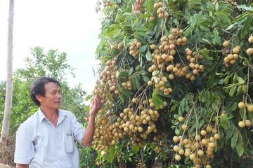 Nông nghiệp tăng trưởng cao nhất 7 năm qua