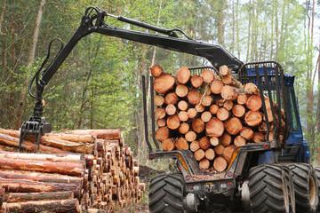 Ngành gỗ 2019 chờ cơ hội bứt phá từ CPTPP, EVFTA