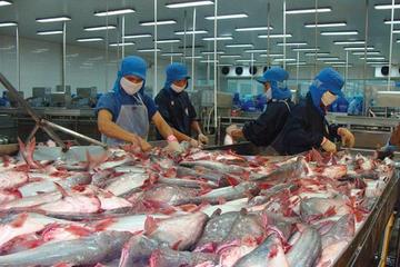Vĩnh Hoàn góp 45% vốn lập công ty nuôi giống cá tra