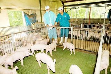 Ngành chăn nuôi gian nan hơn với CPTPP