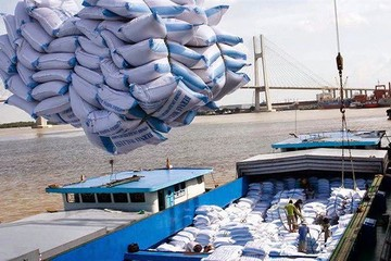 Xuất khẩu gạo đạt trên 3 tỷ USD
