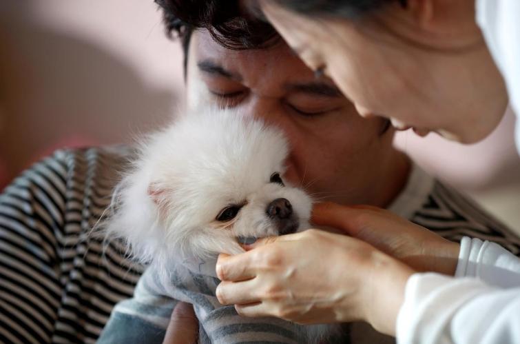Nuôi con tốn kém, cha mẹ Hàn Quốc chuyển sang nuôi thú cưng