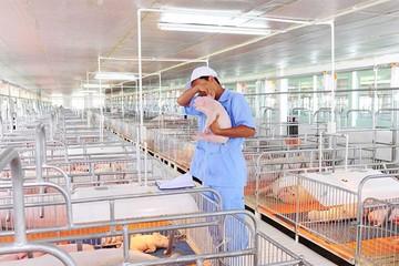 Xu thế phát triển chăn nuôi của thế giới