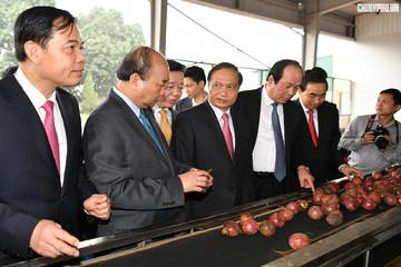 Thủ tướng: Nông nghiệp thông minh có thể trở thành 'đòn bẩy' chiến lược của Việt Nam
