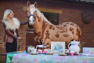 Nhà tạo mẫu tóc cho ngựa