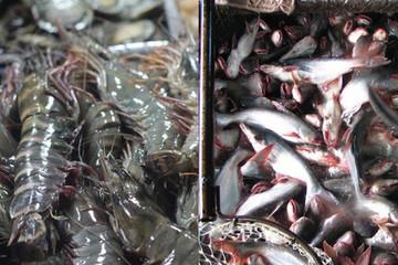 Đầu 2019, xuất khẩu cá tra, tôm đồng loạt giảm