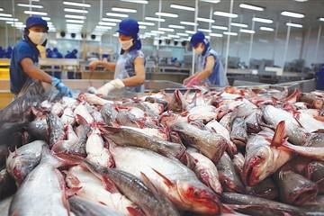 VHC: Nguồn cung cá tra về cuối năm sẽ bị thắt chặt