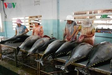 Nhiều lô hàng cá ngừ nằm cảng, VASEP 'cầu cứu'