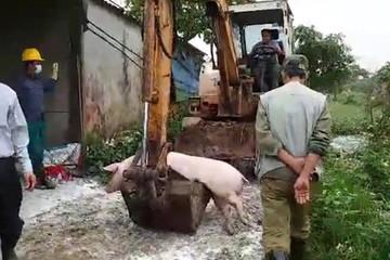 Dịch tả lợn châu Phi: Khuyến cáo người dân không ăn tiết canh, nem chạo...