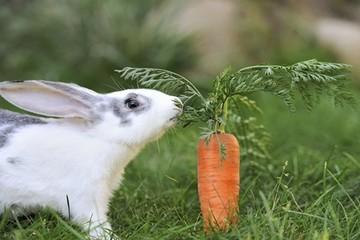 Sẽ không được nuôi thỏ bằng cà rốt, rau muống...?