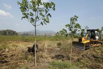 Campuchia thu hồi 742 ha đất đã giao cho Hoàng Anh Gia Lai trả lại dân