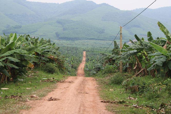 Bãi chuối trăm ha trong siêu dự án nghìn tỷ nuôi bò Bình Hà