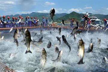 Tôm, cá tra, hàng may mặc vào Nhật Bản được miễn thuế ngay nhờ CPTPP