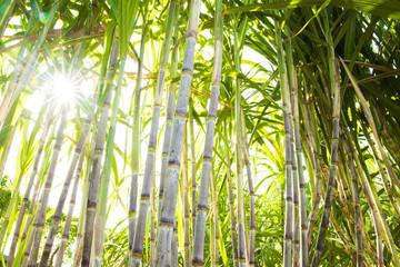 Hiệp hội Mía đường kêu cứu vì tồn đọng, ế ẩm