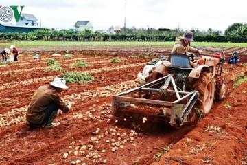 Lâm Đồng dán tem chống giả cho hơn 1.500 tấn khoai tây Đà Lạt