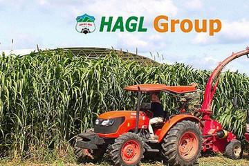 Hoàng Anh Gia Lai (HAG): Doanh thu quý I đạt 410 tỷ đồng, hoàn thành 8% kế hoạch năm