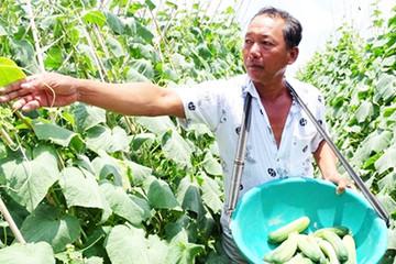 Nông dân Cà Mau 'đưa màu' xuống ruộng thu lãi cao