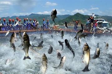 'Đũa thần' FTA đưa xuất khẩu cá tra thăng hoa