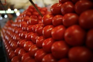 Mỹ áp thuế 17,5% đối với cà chua nhập khẩu từ Mexico