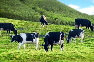 Bộ trưởng làm việc với Mộc Châu Milk: Phải làm sao khi nhắc Sơn La là nhắc tới sữa