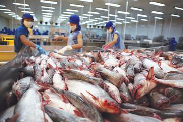 Xuất khẩu cá tra sang Nhật đạt kỷ lục trong 3 tháng đầu năm