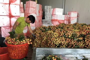 Trung Quốc vẫn nhập phần lớn quả vải từ Việt Nam dù sản lượng kỷ lục