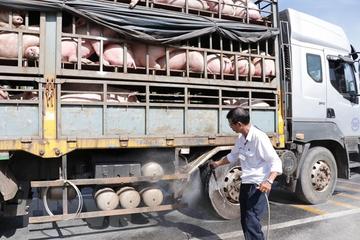 Dịch tả lợn châu Phi đã lan ra 46 tỉnh, thành phố trên cả nước