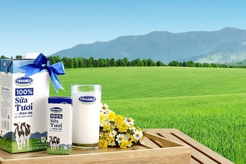 BVSC: Sữa Mộc Châu là tiền đề phát triển dòng sữa cao cấp của Vinamilk